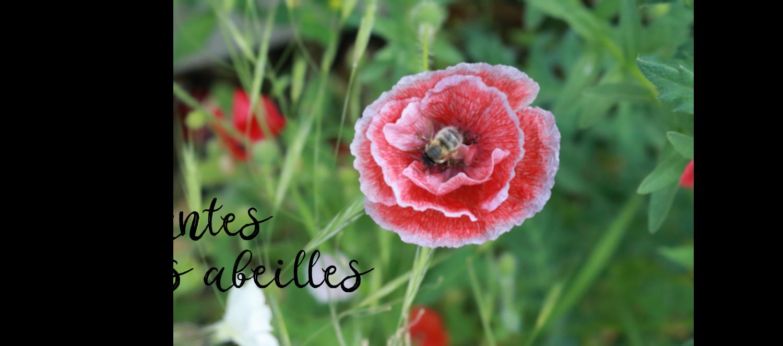 plantes mellifère à cultiver sur une balcon pour les abeilles