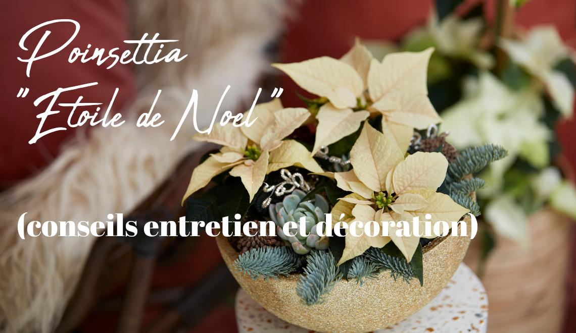 conseils entretien jardinage poinsettia pour noel